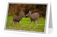 Mother and Daughter - Deer photo from  Cortes Island BC, Canada
