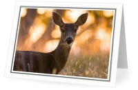 Doe Portrait - Deer photo from Smelt Bay Cortes Island BC, Canada