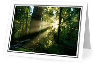 Sun Shining into the Old-growth - Forest photo from  Cortes Island British Columbia, Canada