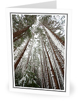 Winter Wonderland - Cortes Style - Forest photo from  Cortes Island British Columbia, Canada