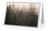 Foggy Forest - Forest photo from Manson Landing Cortes Island BC, Canada