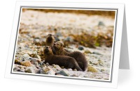 Otter Family - Otter photo from Smelt Bay Cortes Island BC, Canada