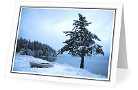 West Coast Chirstmas - Winter Landscape photo from  Cortes Island British Columbia, Canada