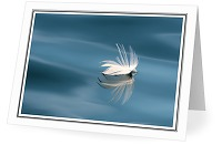 Floating Seagull Feather - Nature Still Life photo from  Mitlenatch Island British Columbia, Canada