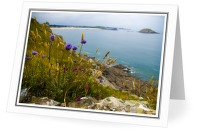 Bretagne Wildflowers - Landscape  photo from  St. Malo Bretagne, France
