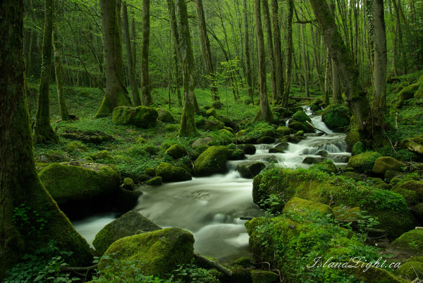 Spring ~ Creek Photo from Route de Plombiers France.
