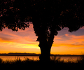 Arbutus Silhouette - Arbutus Tree photo from  Cortes Island BC, Canada