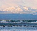 Mountain and Dunlin - Dunlin photo from Smelt Bay Cortes Island BC, Canada