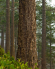 Cortes Island Forest photo