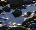 Stars - Tide Pool photo from  Cortes Island BC, Canada