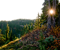Mount Washington  trees and sun - Landscape  photo from  Mount Washington British Columbia, Canada