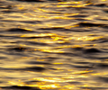 Salish Sea Reflection photo