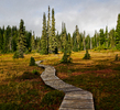 Paradise Meadows trail - Landscape  photo from Paradise Meadows Strathcona Provincial Park British Columbia, Canada