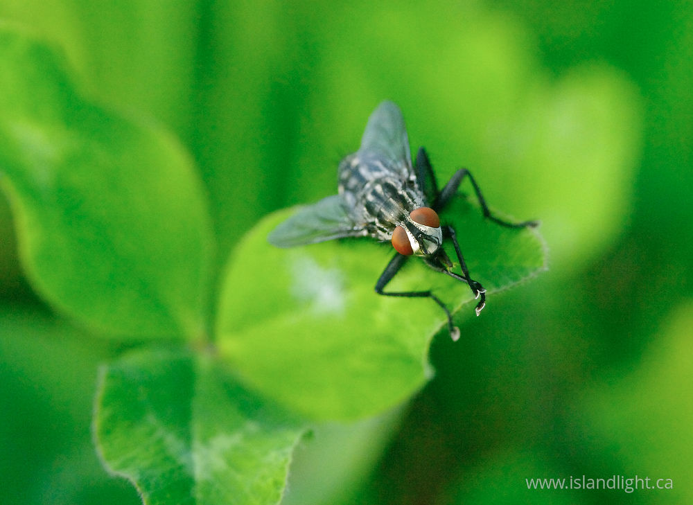 Insect  photo from  Aillevillers, Haute-Saone France.
