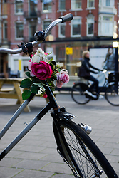 Flowers on the handlebars of an Amsterdam bicycle 2 - Amsterdam Bike photo