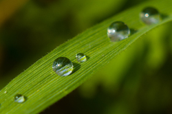 Crystal -  droplet photo
