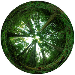 360 Degree Forest - Cathedral Grove Forest photo