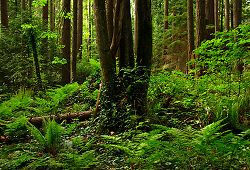 A Wild Spot in Pacific Spirit Park - Pacific Spirit Park Forest photo