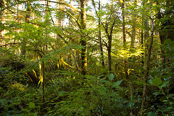 Rain Forest - Cortes Island Forest photo