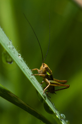 Cricket - France  photo