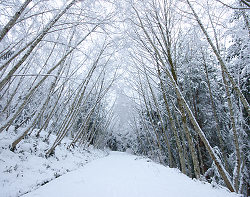 Snowy Road Through the Woods - Cortes Island  photo